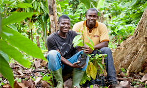 STRENGTHENING THE NESTLÉ COCOA PLAN